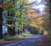 Fall Colours Road,Mariane C