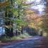 Fall Colours Road,Mariane C