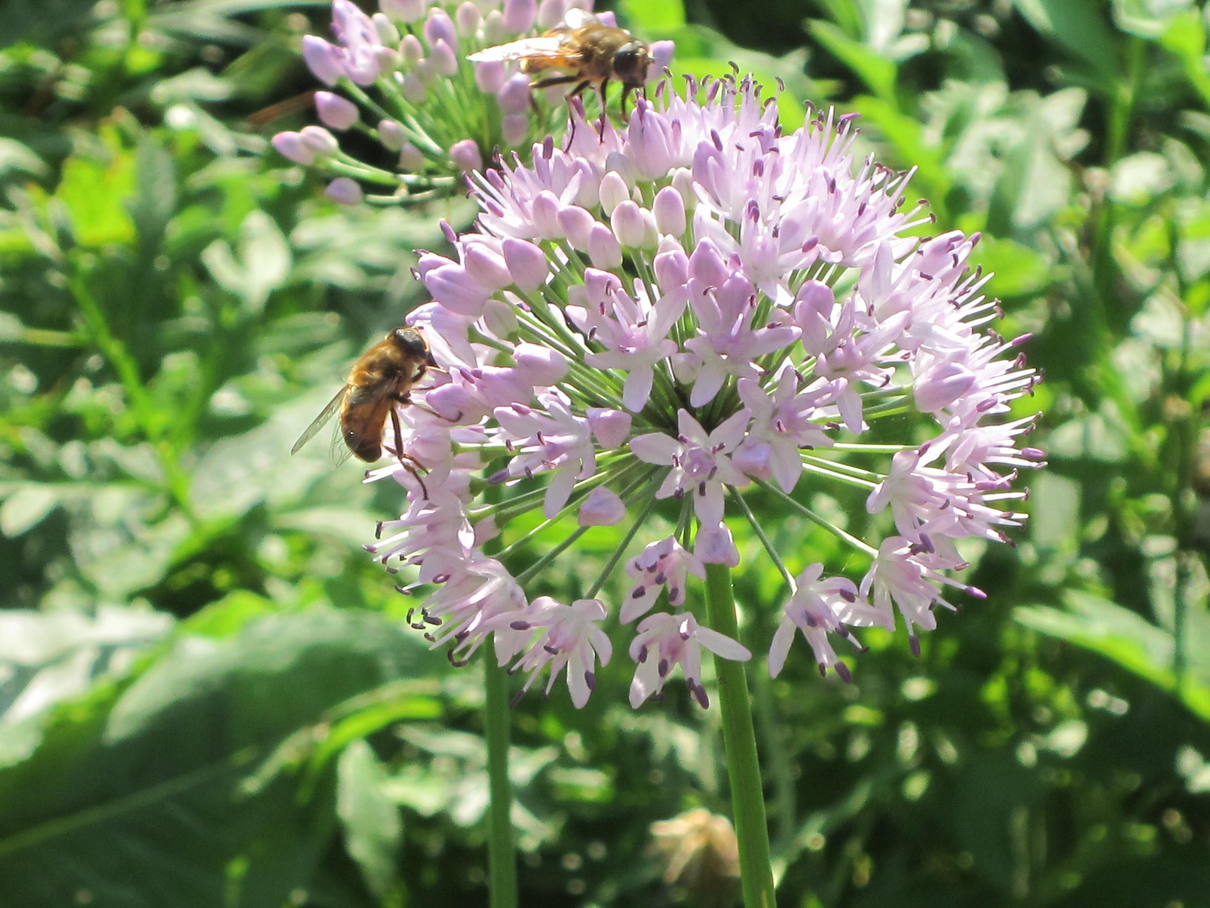 Neonic-free garden plants