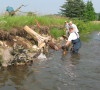 Nottawasaga Steelheaders at work on stream restoration