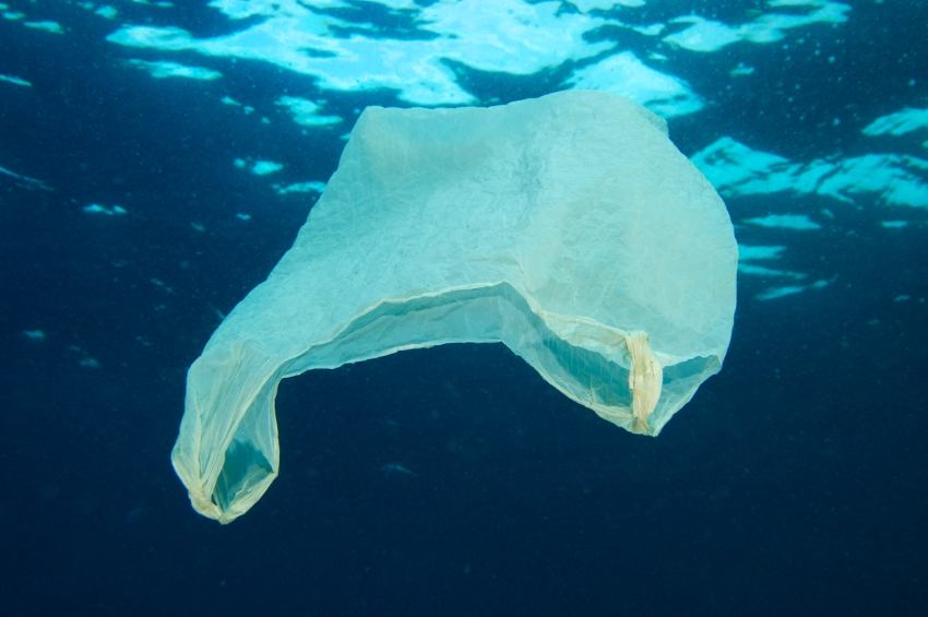 Plastic bag afloat in ocean