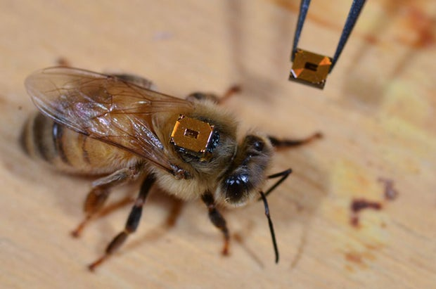 bee-transmitter