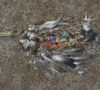 Seabird pn plastic diet