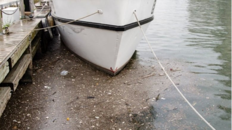 Raw sewage in Toronto's inner harbour after an August storm. -Swim Drink Fish Canada photo