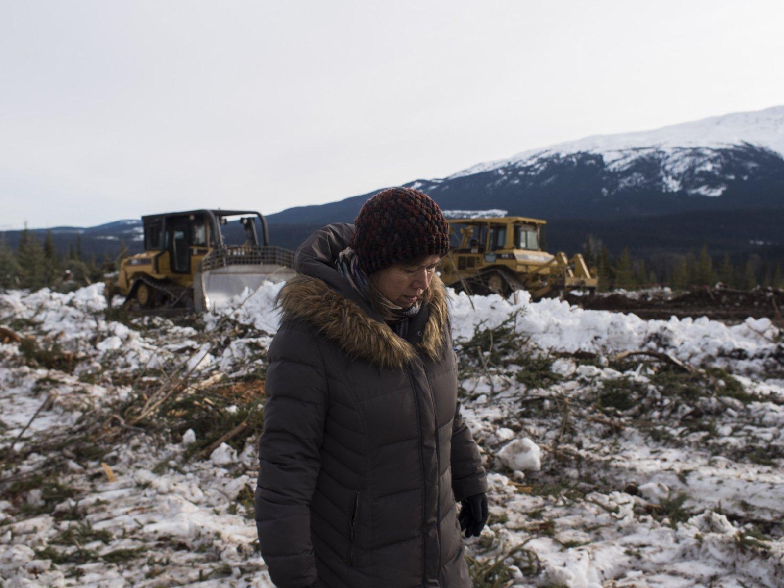 Trapline bulldozed -Michael Toledano photo