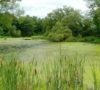 North Gwillimbury wetland © Tim Hagen
