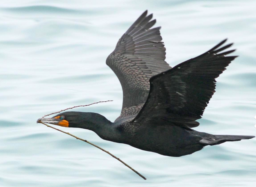 Call for Yakabuski and the MNRF to provide a science-based, detailed and peer-reviewed approach to resolve conflicts with cormorants