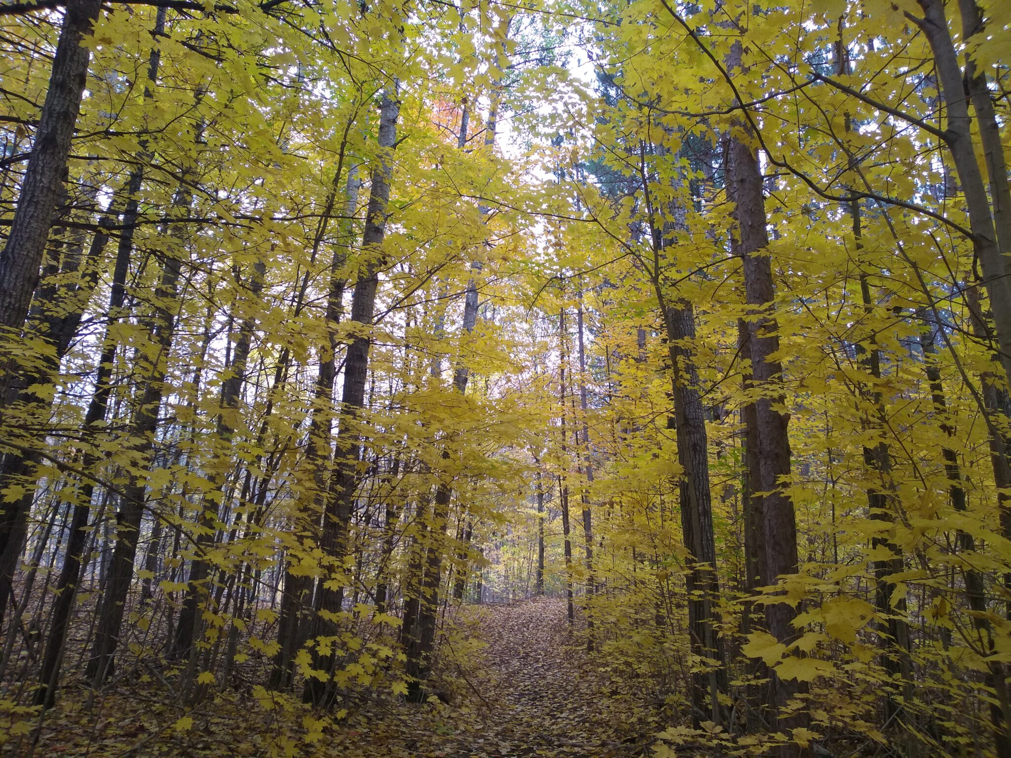 Simcoe County Forest